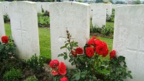 gravestones+poppies